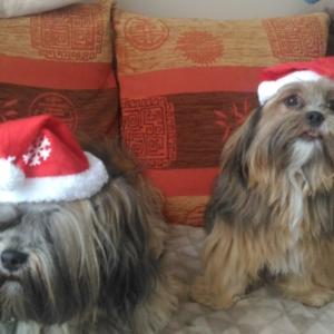 Bing'O Christmas